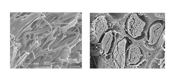 【海岛型超细纤维面料】海岛型超细纤维面料介绍