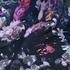 花朵 期货 梭织 印花 连衣裙 衬衫 短裙 薄 女装 春夏秋 60621-217