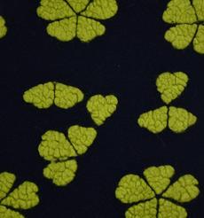 花朵 提花 呢料 柔軟 羊毛 大衣 外套 女裝 60803-57